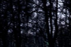 fotobraz_msc_582001